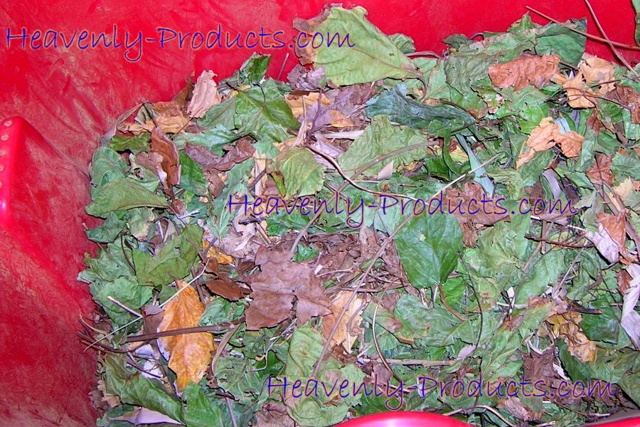 Dried B Caapi Leaves Banisteriopsis Caapi Dried Plants