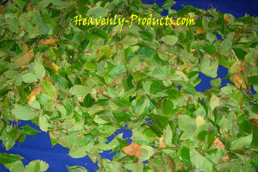 Banisteriopsis caapi - Yellow - Dried Leaves