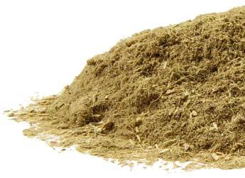 Ephedra Sinica- Ephedra - Dried Plants - Ethnobotanical
