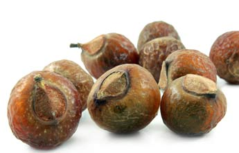 Sapindus mukorossi- Soap Nuts